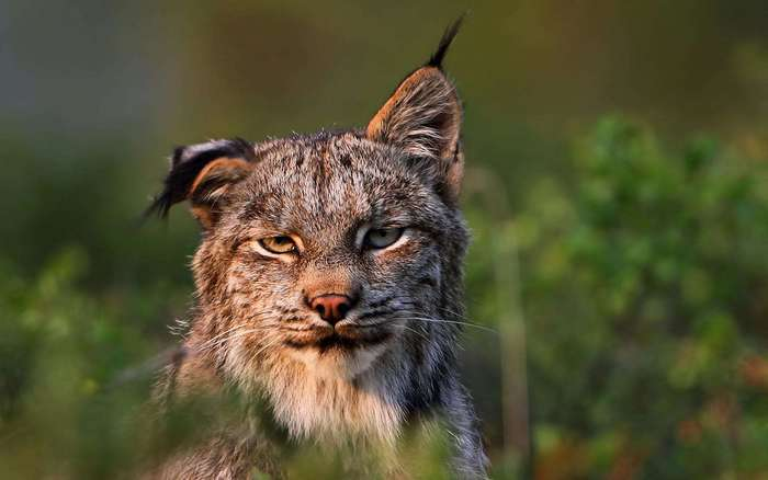 30 веселых фотографий с животными