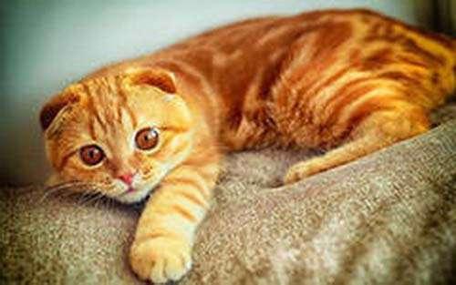 Опять про котиков