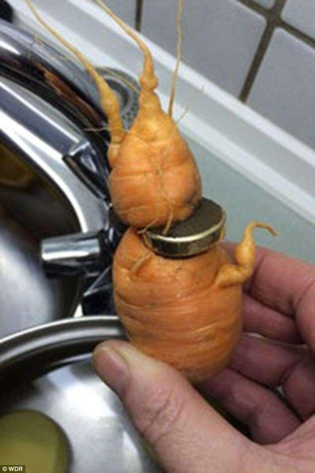 Морковь помогла пенсионеру найти потерянное обручальное кольцо