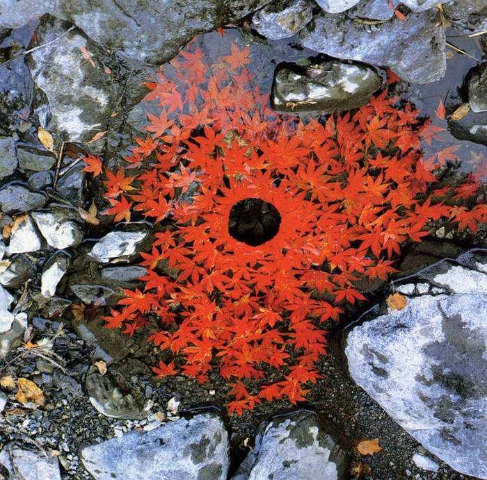 Эти неотфотошопленные фотографии природы вас поразят!