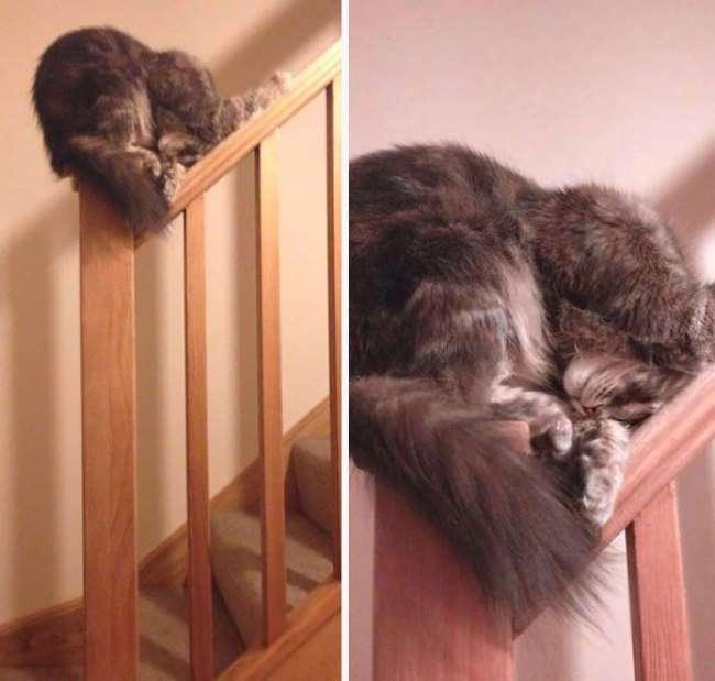 10 изобретательных котов, которые спят так, что вы залюбуетесь!