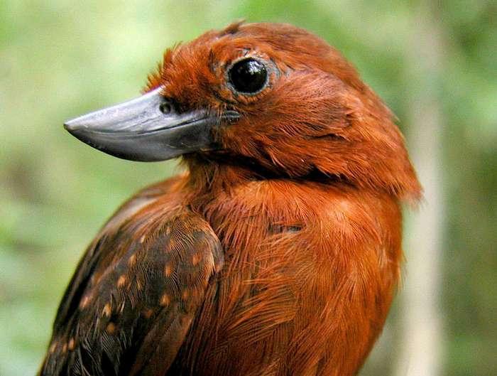 10 странных птиц, в существование которых сложно поверить