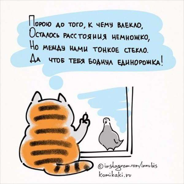 Жизненные хитрости от кота