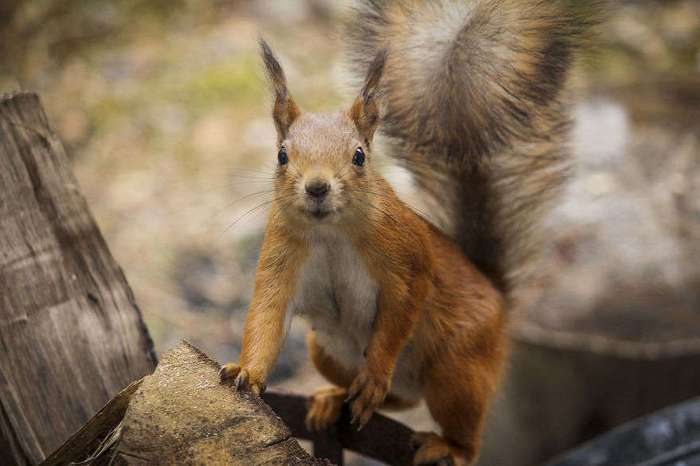 Забавные фотографии животных со всего мира
