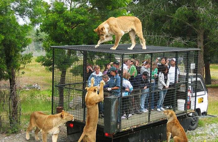 Эти прикольные обитатели зоопарков