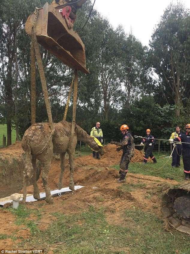 Невероятное спасение коня из глубокого рва, затопленного густой грязью