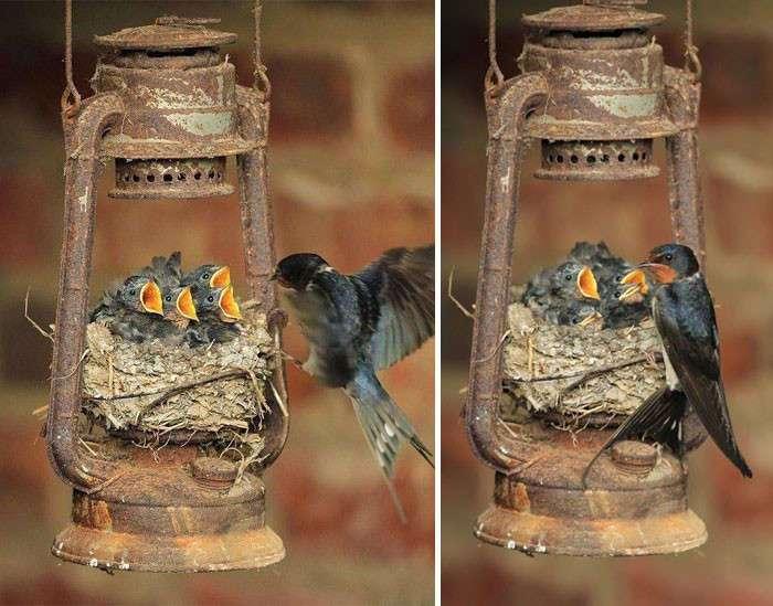 25 трогательных фотографий птиц, заботящихся о своих птенцах