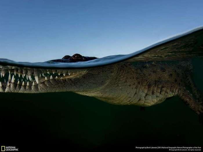Работы финалистов конкурса National Geographic