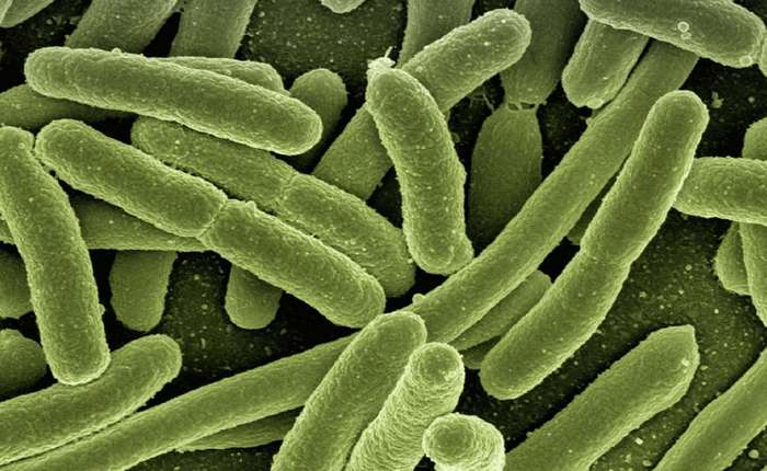 Самые опасные вирусы известные науке