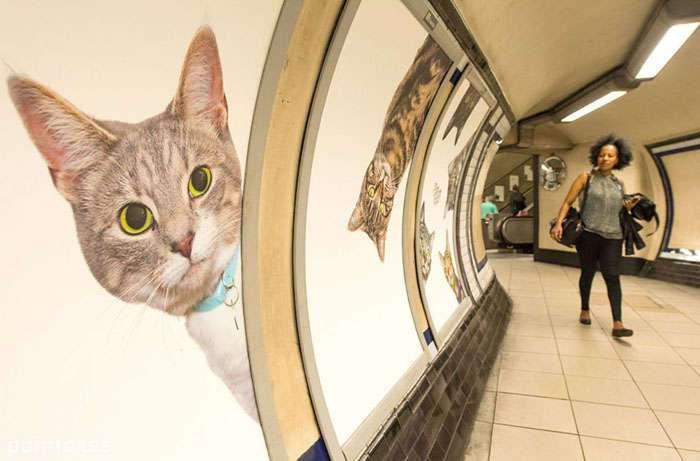Котики атакуют: вся реклама в лондонском метро была заменена на постеры с котами