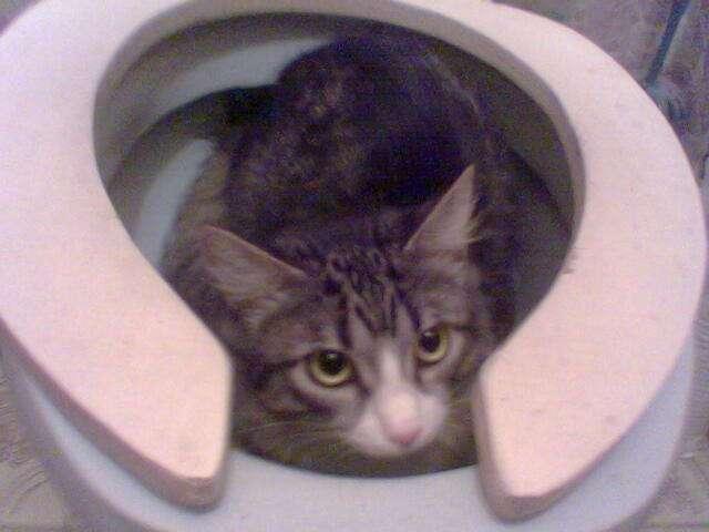 20 мест, куда может спрятаться ваш кот