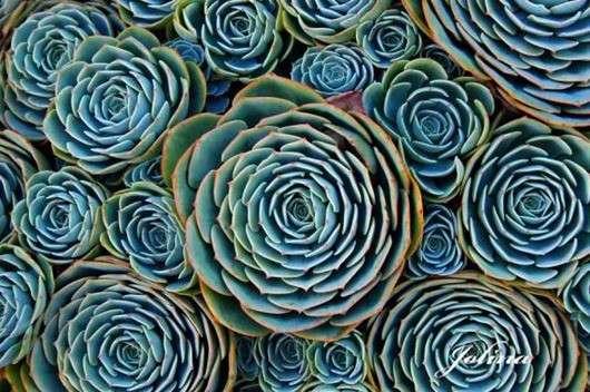Растения, завораживающие взгляд