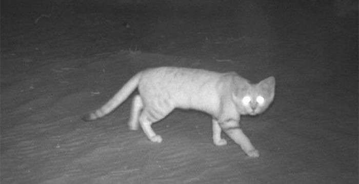 Таинственные пятничные котики