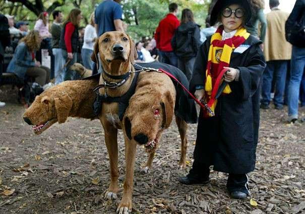 70 страшно прекрасных хэллоуинских костюмов для собак