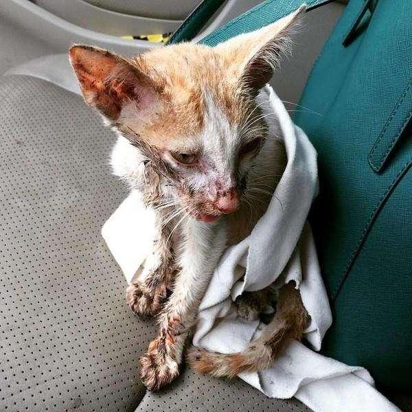 Ветеринар хотел усыпить его, но любовь и забота в который раз сотворили чудо