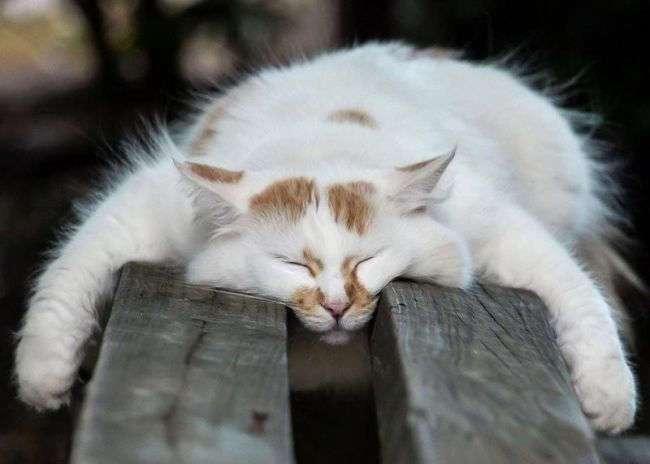 Коты, познавшие науку сна (35 фото)