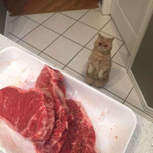 Кот Джордж, который любит сидеть на задних лапах