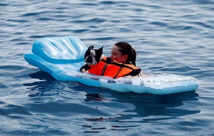 Бар для собак в Хорватии