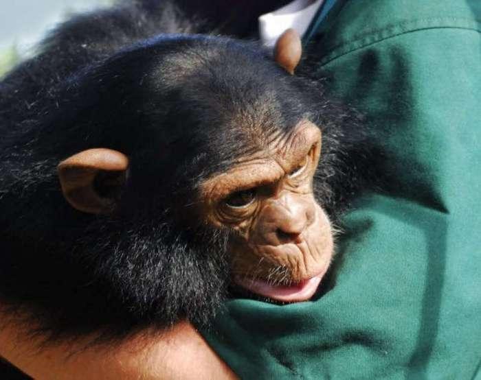 10 удивительных историй о проявлении сочувствия животными