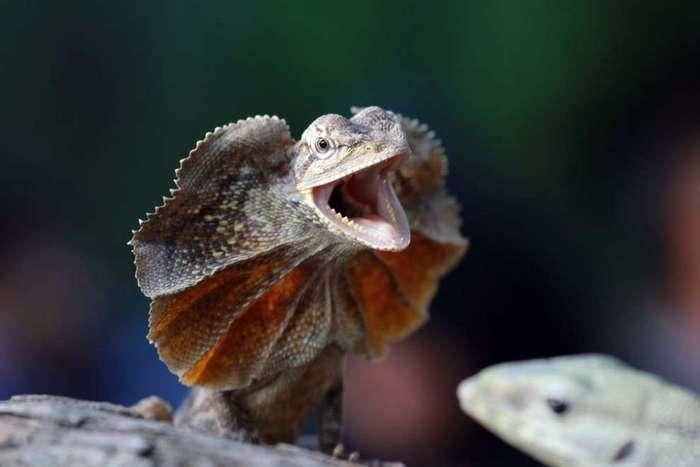 Лучшие фотографии живой природы