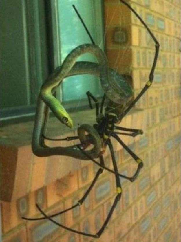 19 пугающих, но привычных местным жителям обитателей австралийских задних дворов