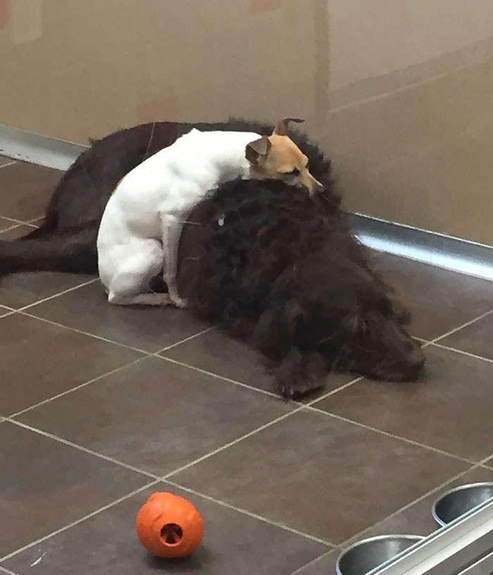 Двое приютских псов стали неразлучными друзьями