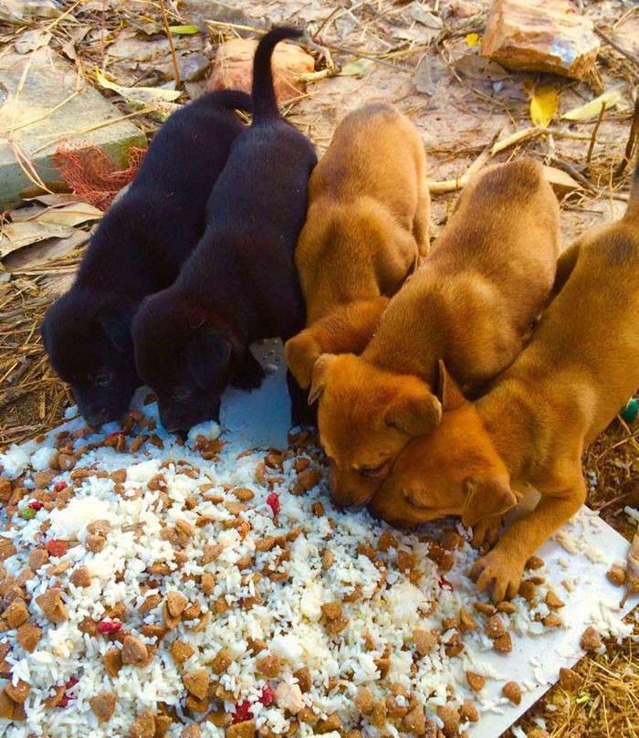 Мужчина ежедневно кормит 80 бездомных собак, потому что не может видеть, как они голодают