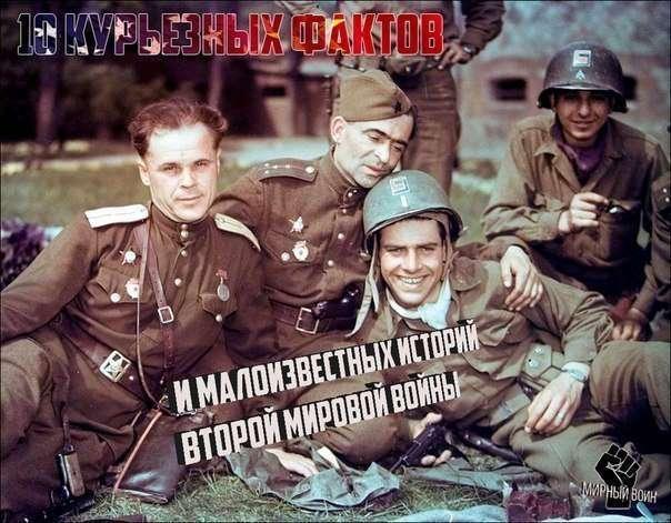10 курьезных фактов и малоизвестных историй Второй мировой войны