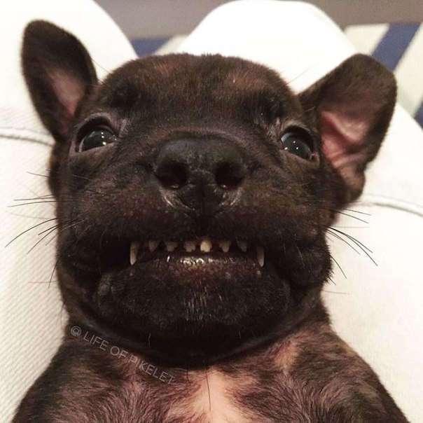 Взрослые собаки взяли опеку над спасенным щенком
