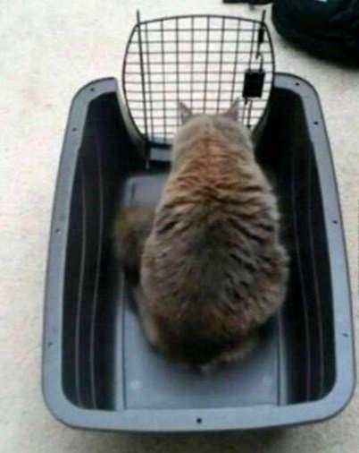 Кошачья логика в прикольных картинках