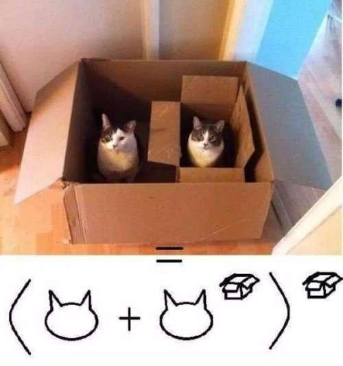 Фотоприколы с кошками