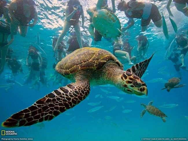Животные от National Geographic