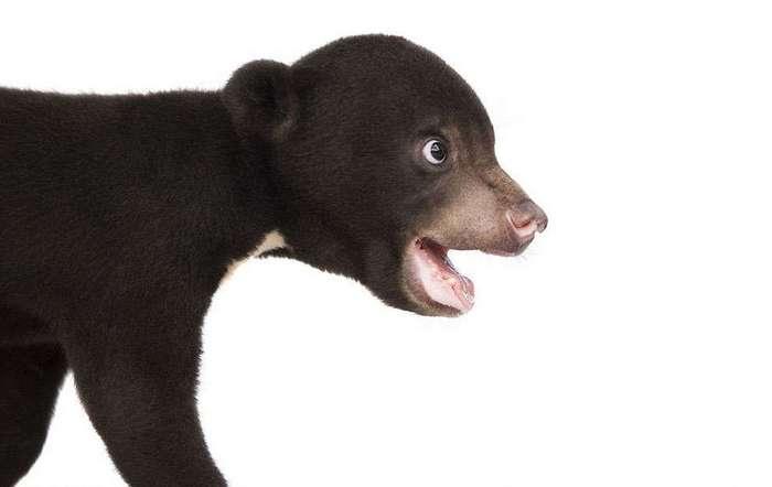 Первая фотосессия самого милого медвежонка в мире