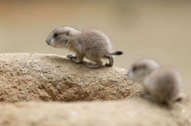 Животные-милашки