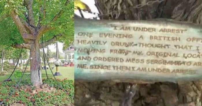 Арестованное дерево в Пакистане