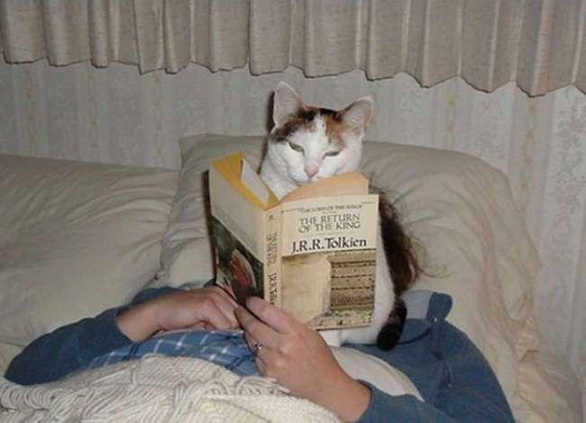 Фото котов, которые плевать хотели на ваше личное пространство