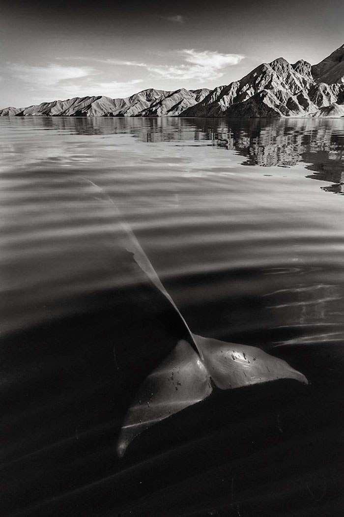 Киты в работах известного британского фотографа Кристофера Суонна