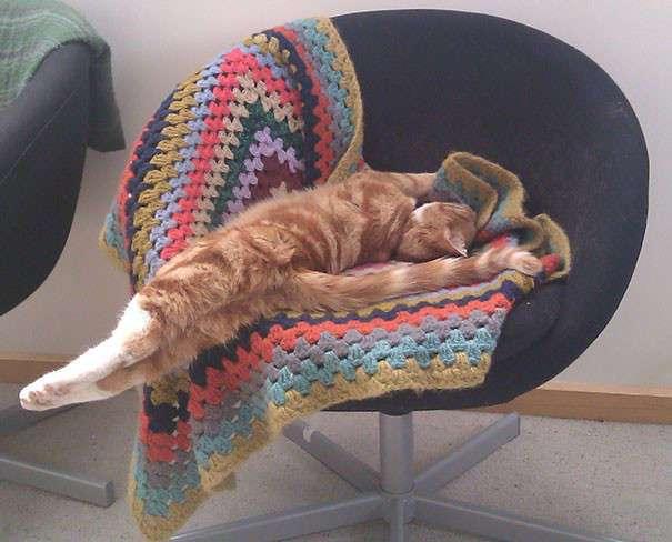 55 забавных доказательств того, что кошки могут уснуть где угодно
