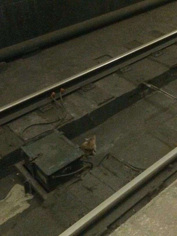 Ради спасения котенка мужчина прыгнул на рельсы метро