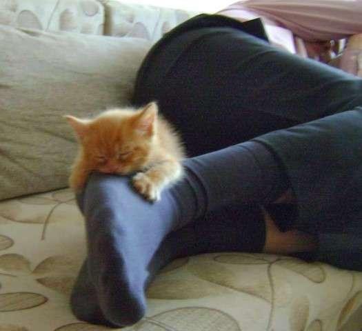 Теории о том, почему коты любят спать на людях