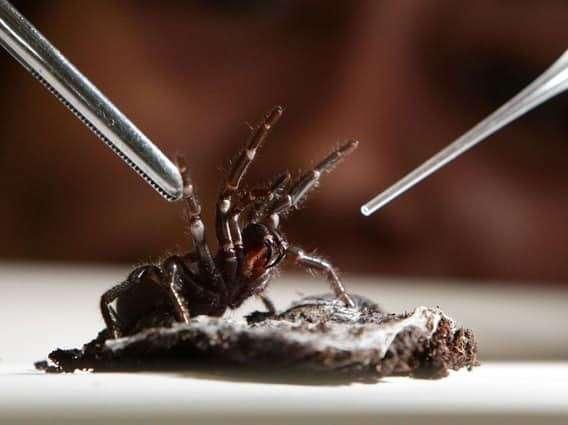 Мерзкие факты о пауках, о которых вам будет мерзко читать!