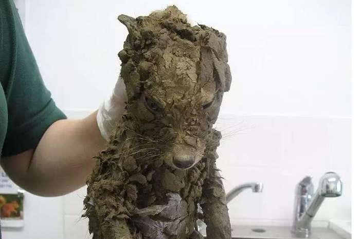 Таинственное животное: его не могли идентифицировать, пока не помыли