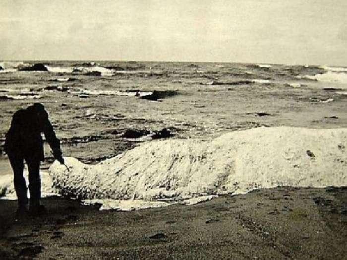 15 самых странных штук, выброшенных морем на берег