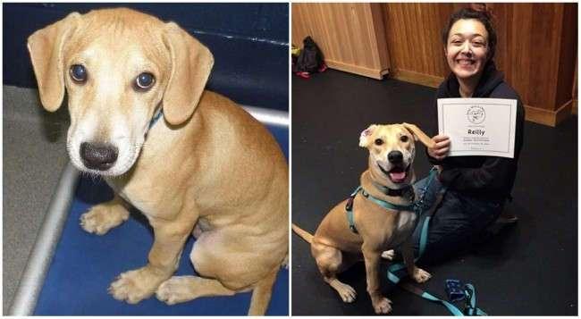 12 фотографий собак, нашедших свой дом