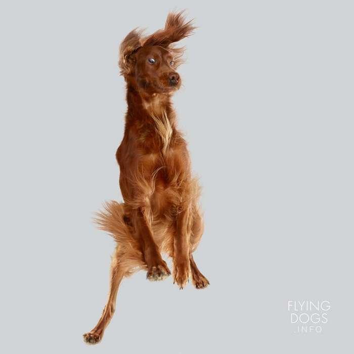 Летающие собаки