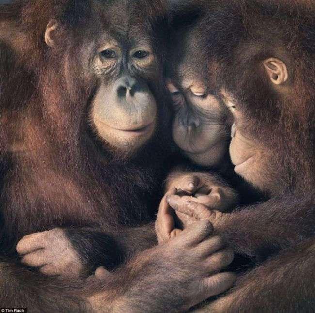 В мире животных. Занятная фотоподборка