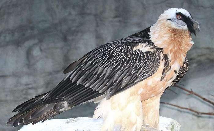Самые большие хищные птицы