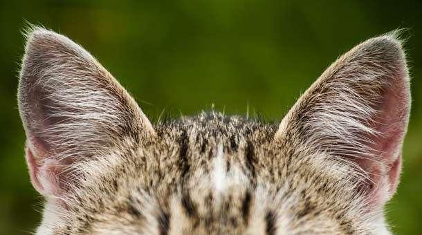 Чего ещё мы не знали о кошках