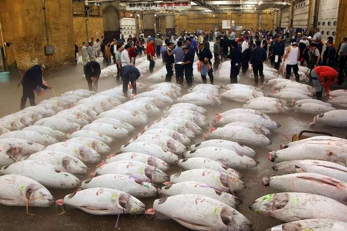 Самый большой рыбный рынок в мире