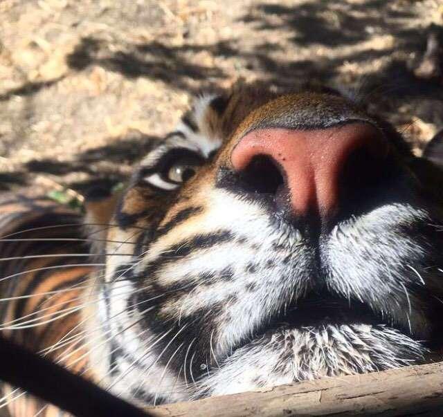 Новая и интересная подборка забавных фотографий животных…